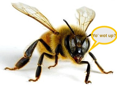 Bees are exceptional communicators